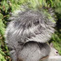 all_about_squirrels002005.jpg