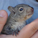 all_about_squirrels002008.jpg